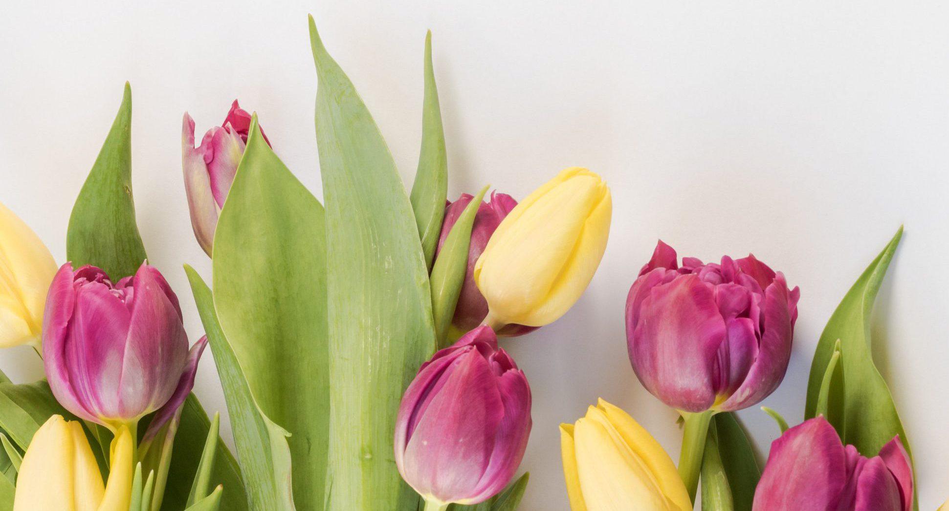 Frühlings Angebote